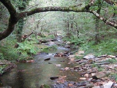 Val de Cambas (1)