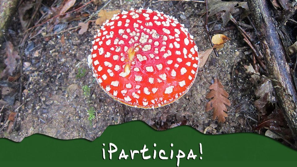 parricipa